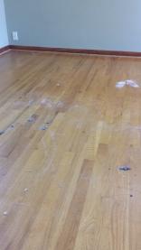 Wood floors under the carpet
